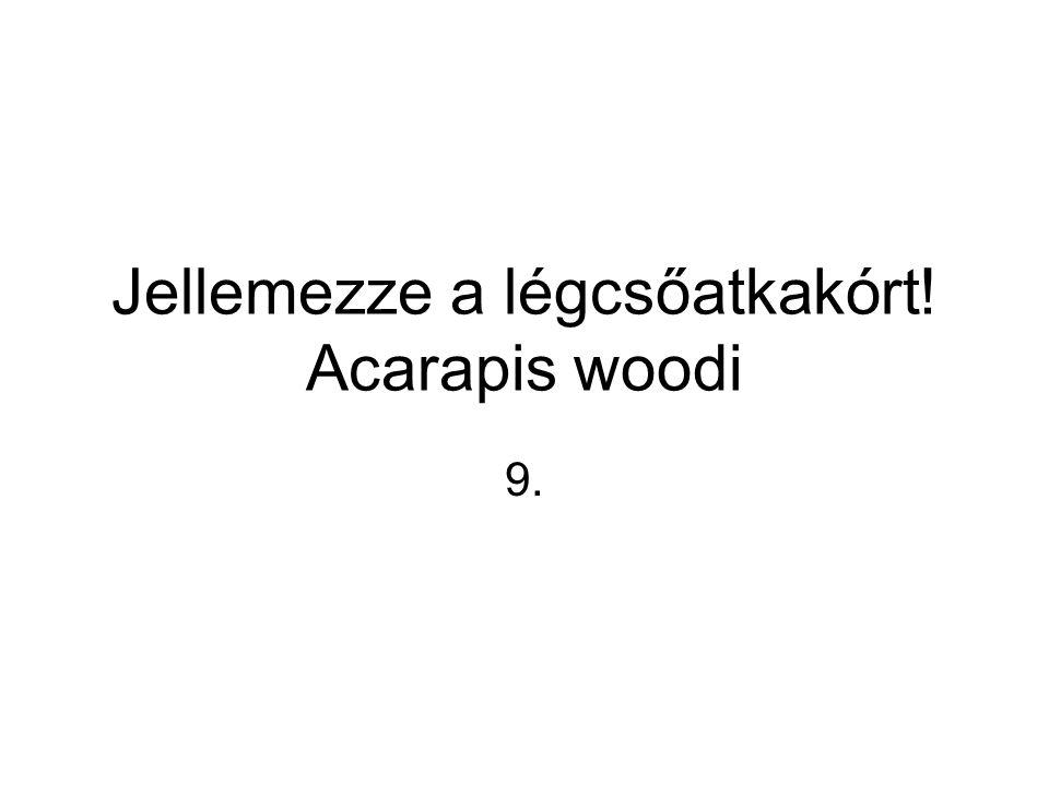 Jellemezze a légcsőatkakórt! Acarapis woodi