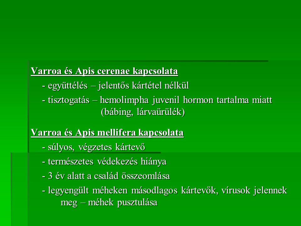 Varroa és Apis cerenae kapcsolata
