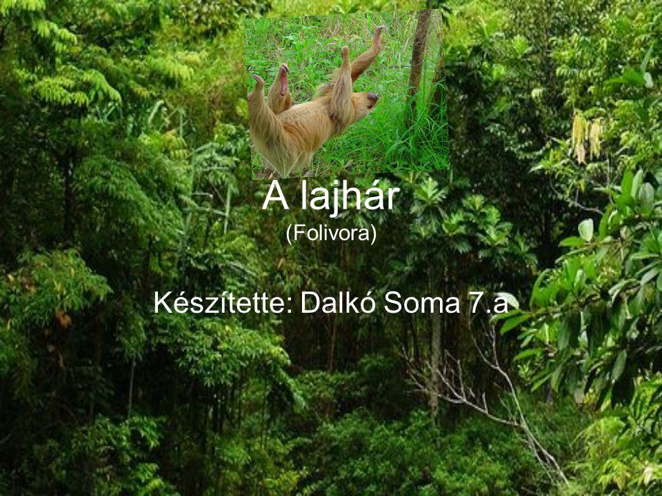 Készítette: Dalkó Soma 7.a