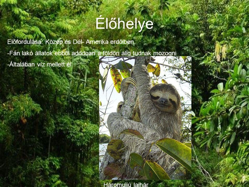 Élőhelye Előfordulása: Közép és Dél- Amerika erdőiben.