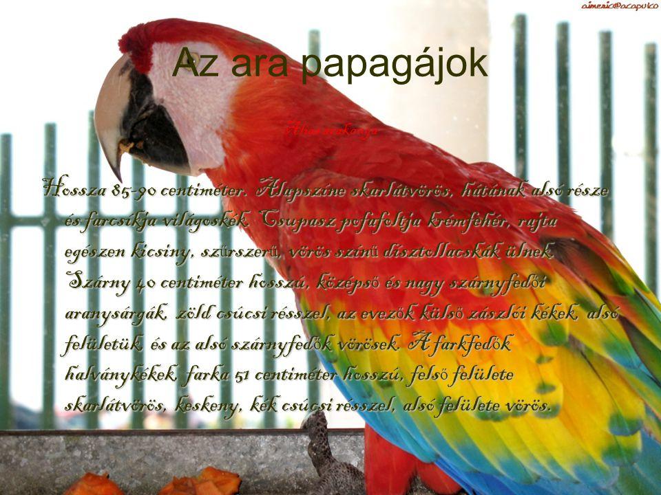 Az ara papagájok Alias arakanga.