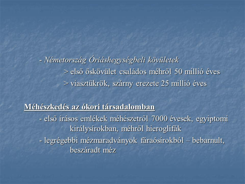 - Németország Óriáshegységbeli kövületek