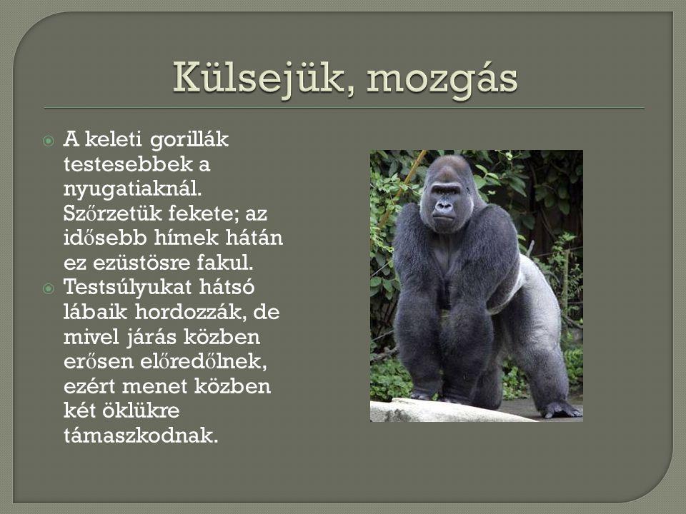Külsejük, mozgás A keleti gorillák testesebbek a nyugatiaknál. Szőrzetük fekete; az idősebb hímek hátán ez ezüstösre fakul.