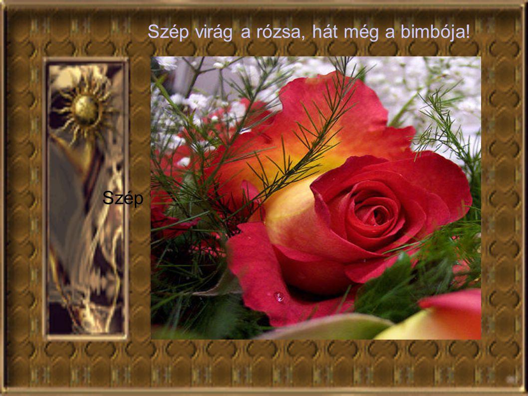 Szép virág a rózsa, hát még a bimbója!