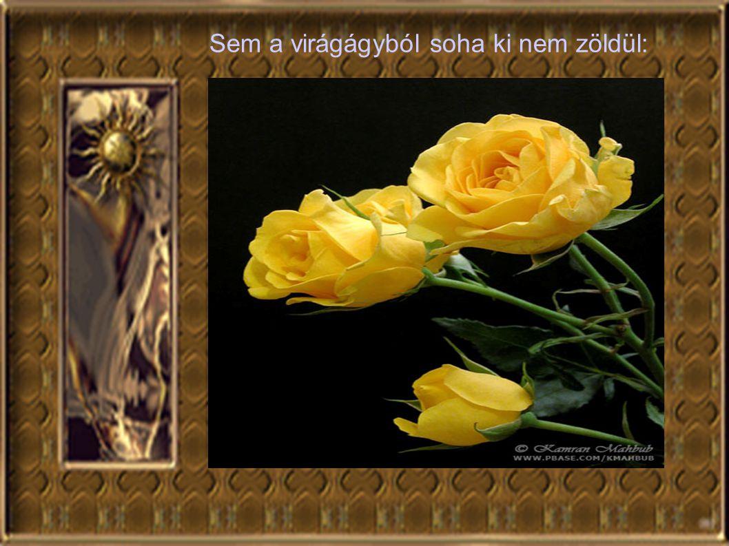 Sem a virágágyból soha ki nem zöldül: