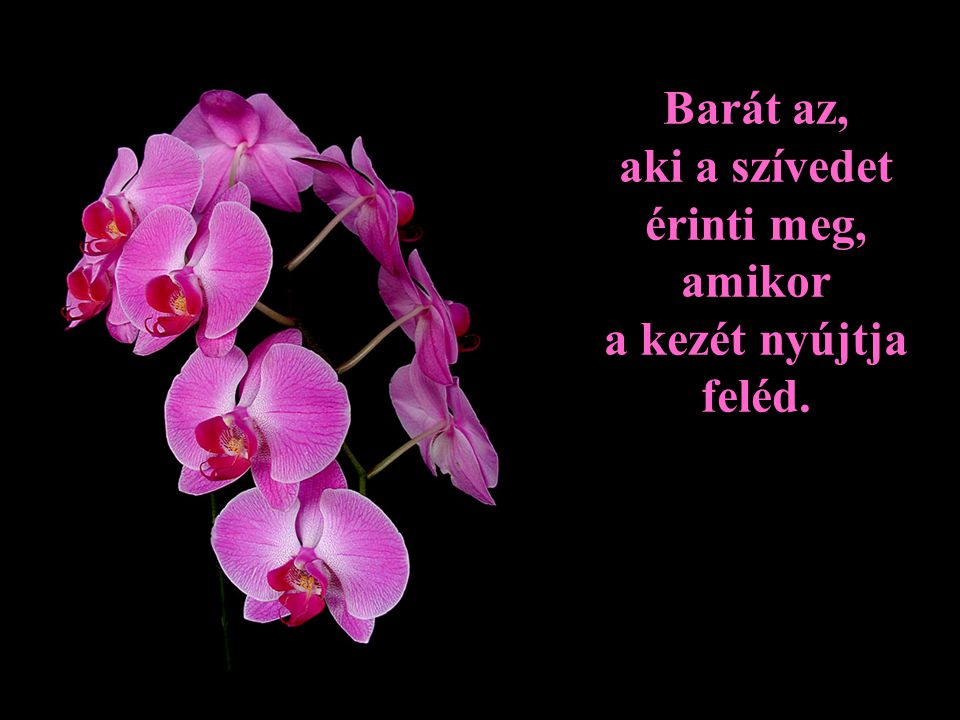 Barát az, aki a szívedet érinti meg, amikor a kezét nyújtja feléd.