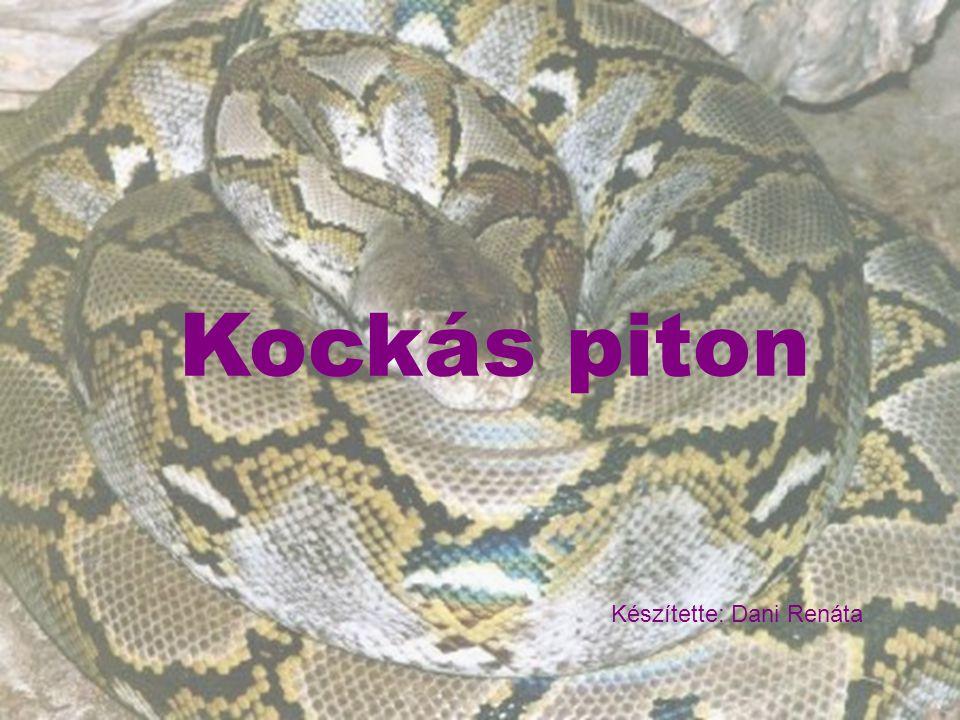 Kockás piton Kockás piton Készítette: Dani Renáta
