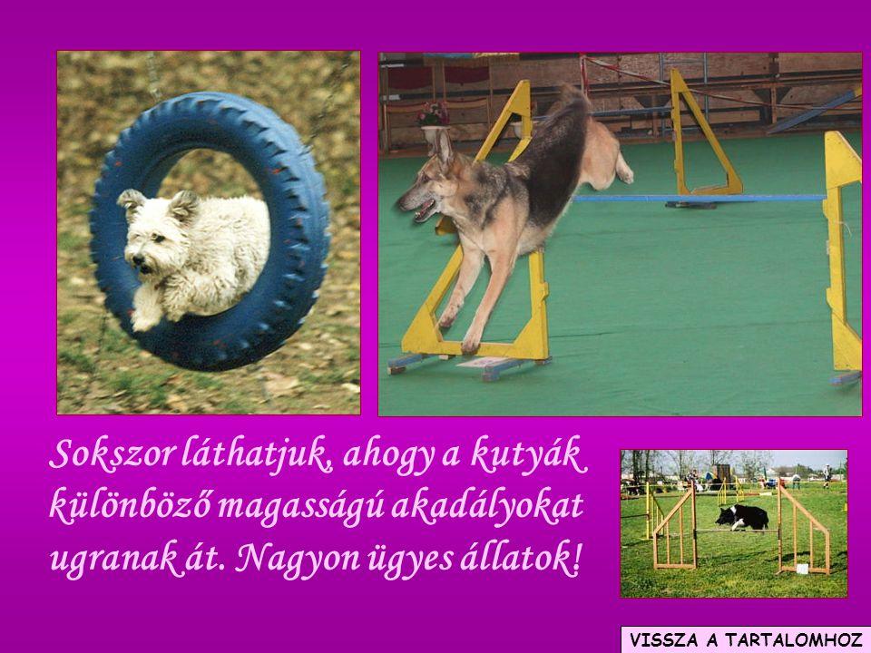 Sokszor láthatjuk, ahogy a kutyák különböző magasságú akadályokat ugranak át. Nagyon ügyes állatok!