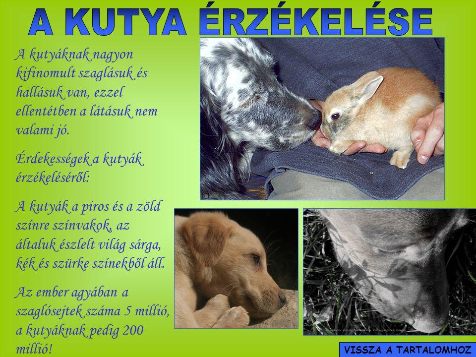 A KUTYA ÉRZÉKELÉSE A kutyáknak nagyon kifinomult szaglásuk és hallásuk van, ezzel ellentétben a látásuk nem valami jó.
