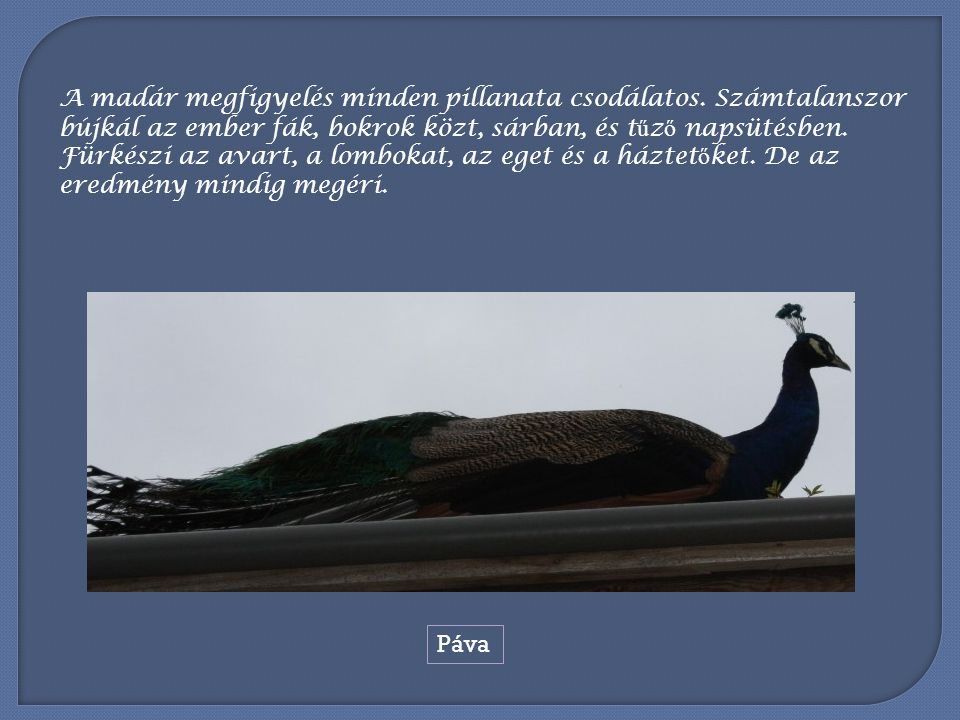 A madár megfigyelés minden pillanata csodálatos