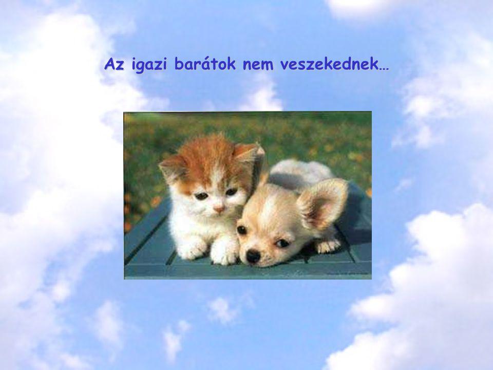 Az igazi barátok nem veszekednek…