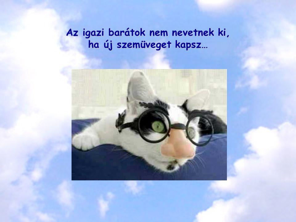 Az igazi barátok nem nevetnek ki, ha új szemüveget kapsz…
