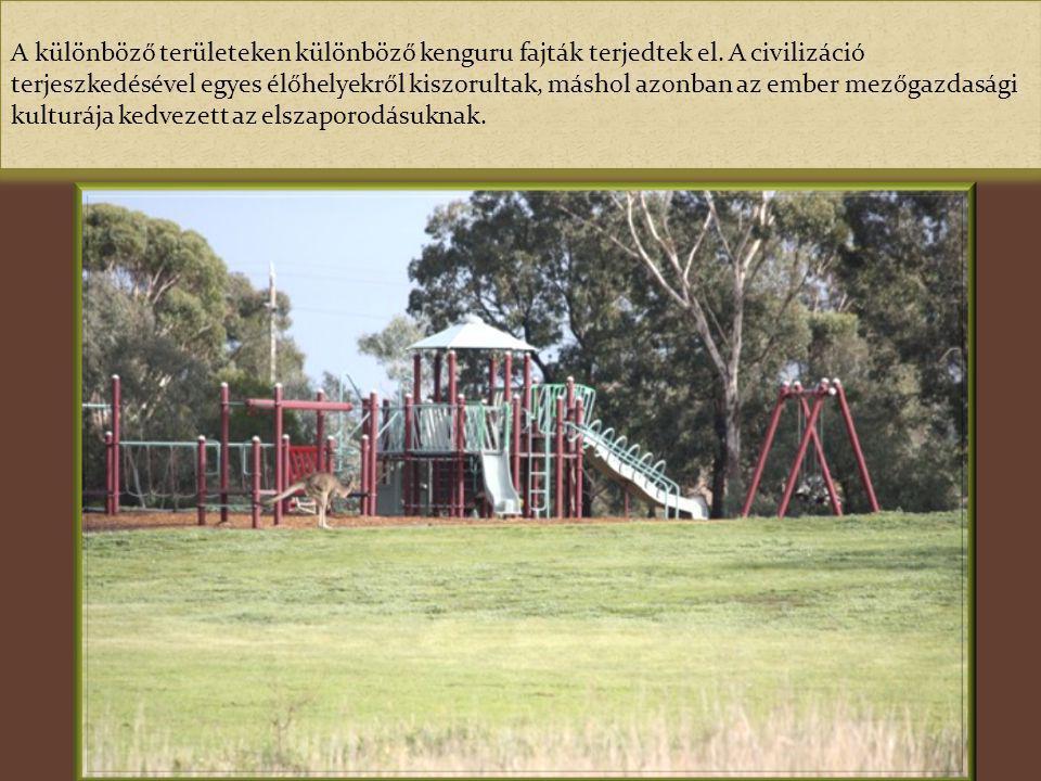 A különböző területeken különböző kenguru fajták terjedtek el