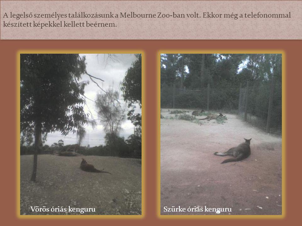 A legelső személyes találkozásunk a Melbourne Zoo-ban volt