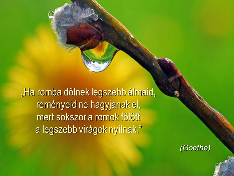 """""""Ha romba dőlnek legszebb álmaid, reményeid ne hagyjanak el, mert sokszor a romok fölött a legszebb virágok nyílnak."""