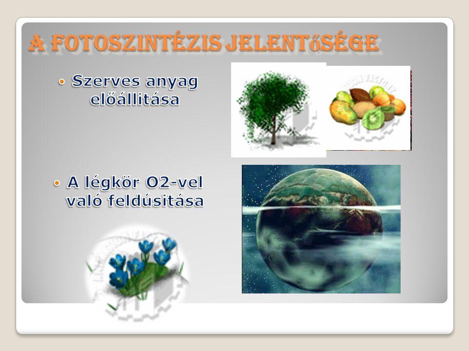 A fotoszintézis jelentősége