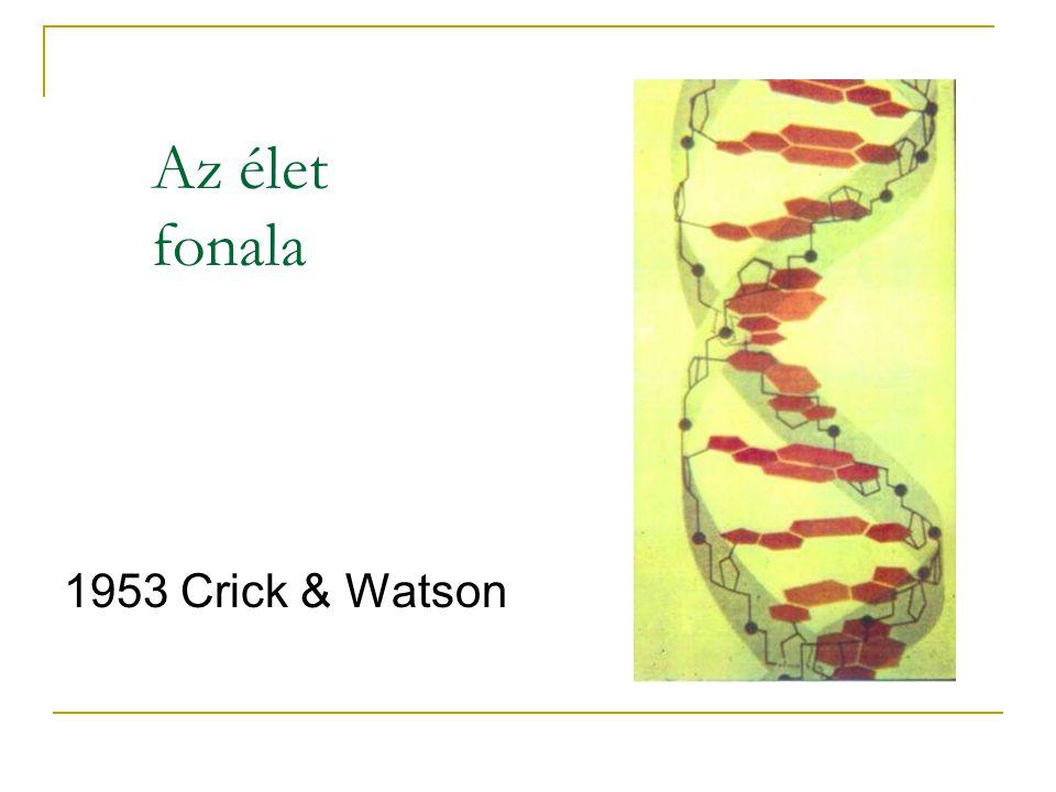 Az élet fonala 1953 Crick & Watson