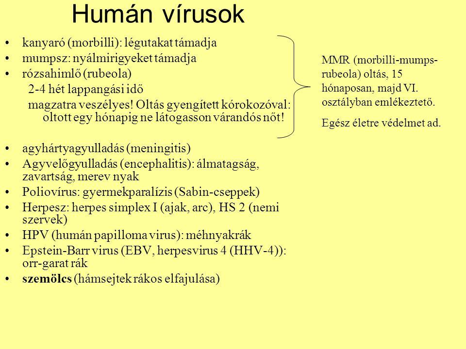 Humán vírusok kanyaró (morbilli): légutakat támadja