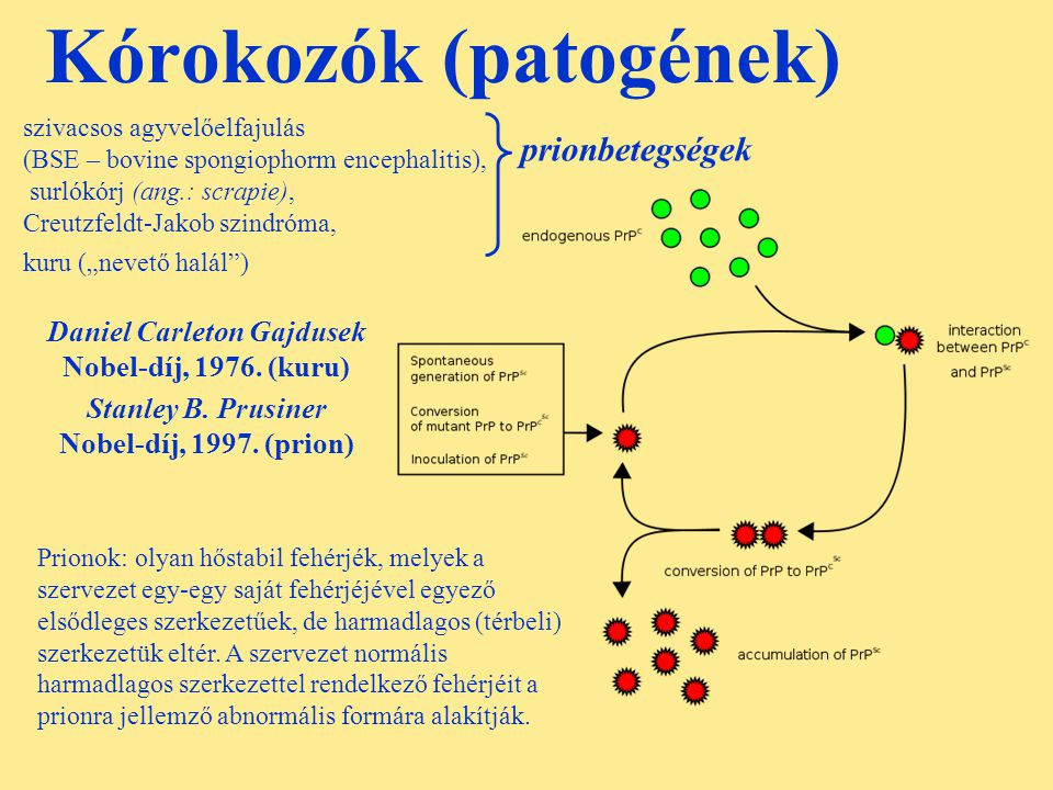Kórokozók (patogének)