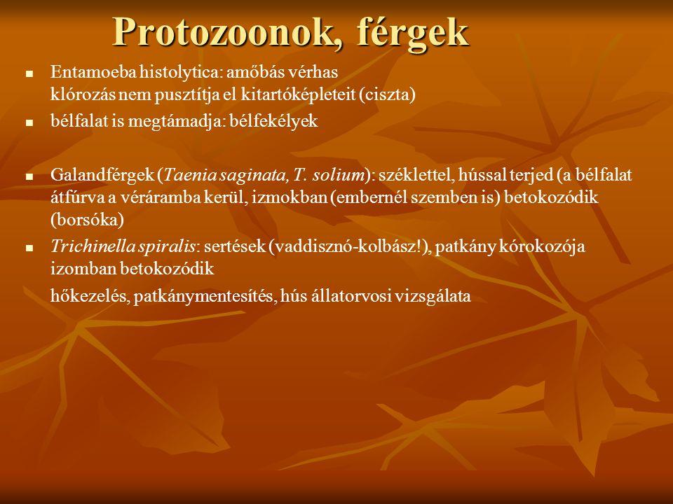 Protozoonok, férgek Entamoeba histolytica: amőbás vérhas klórozás nem pusztítja el kitartóképleteit (ciszta)