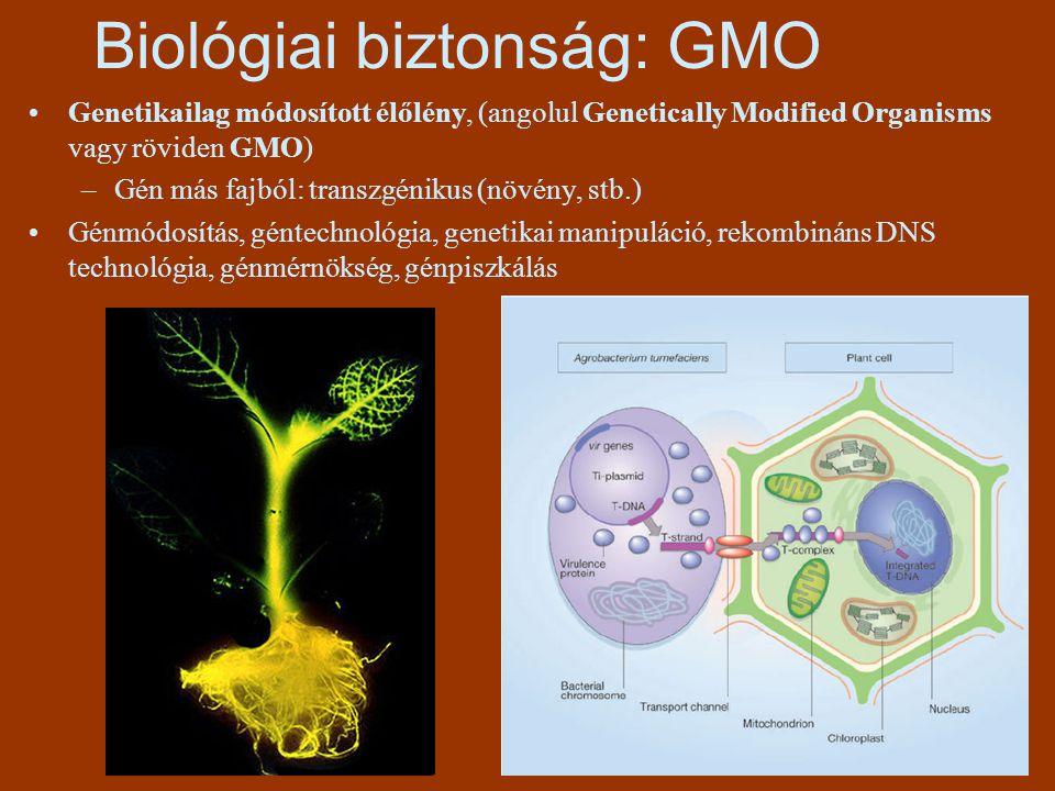 Biológiai biztonság: GMO