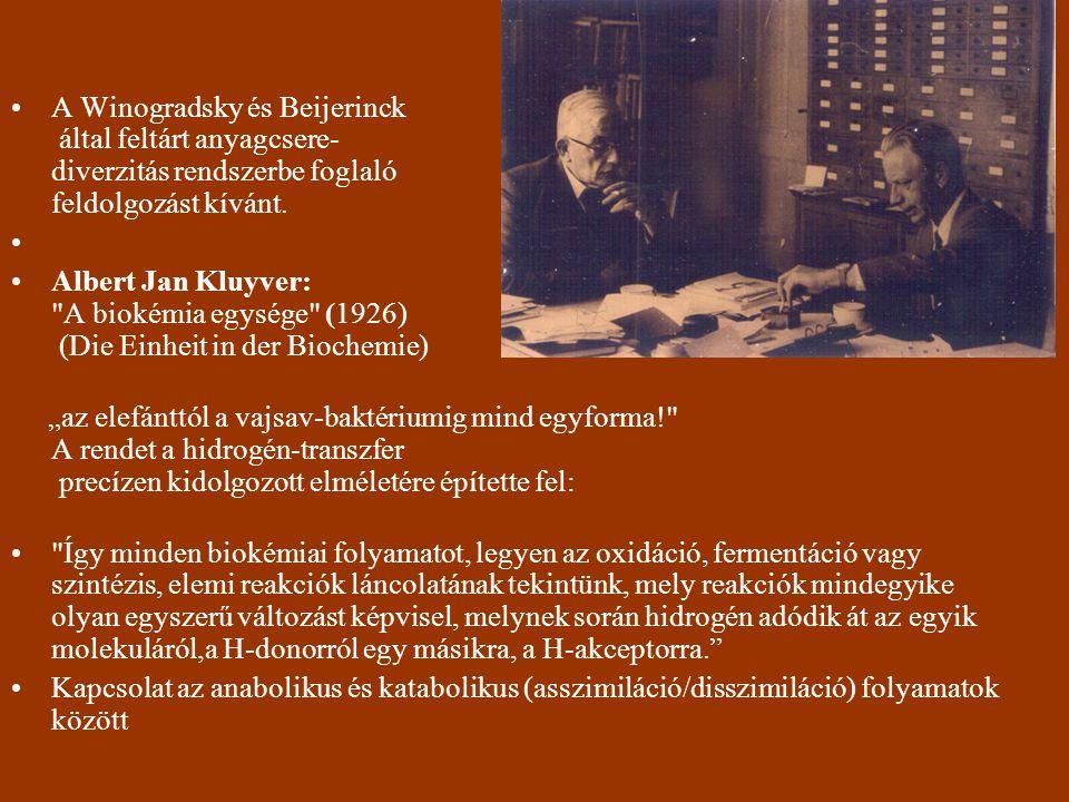 A Winogradsky és Beijerinck által feltárt anyagcsere- diverzitás rendszerbe foglaló feldolgozást kívánt.
