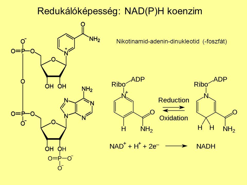 Redukálóképesség: NAD(P)H koenzim