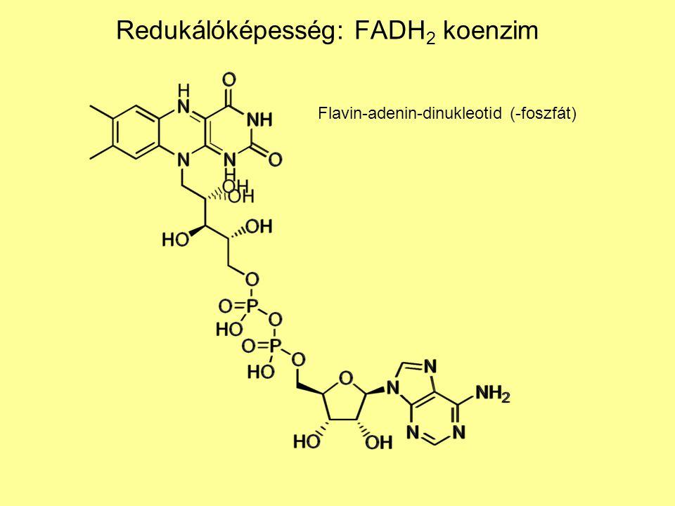 Redukálóképesség: FADH2 koenzim