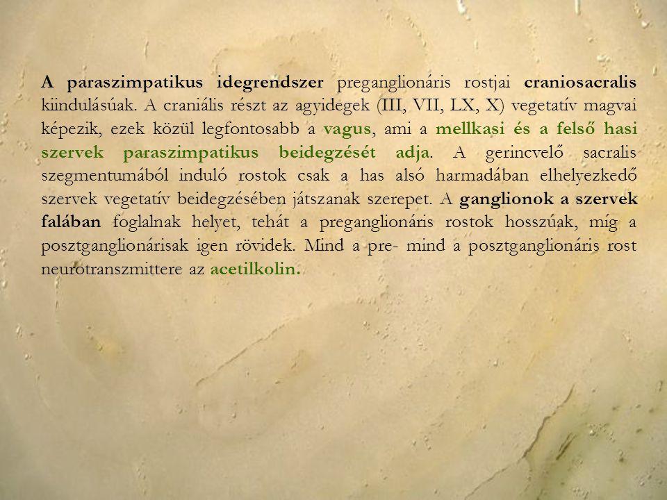 A paraszimpatikus idegrendszer preganglionáris rostjai craniosacralis kiindulásúak.