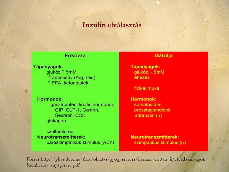 Inzulin elválasztás Forrás:http://phys.dote.hu/files/oktatas/gyogyszeresz/human_elettan_ii/eloadasanyagok/Szenhidrat_anyagcsere.pdf.