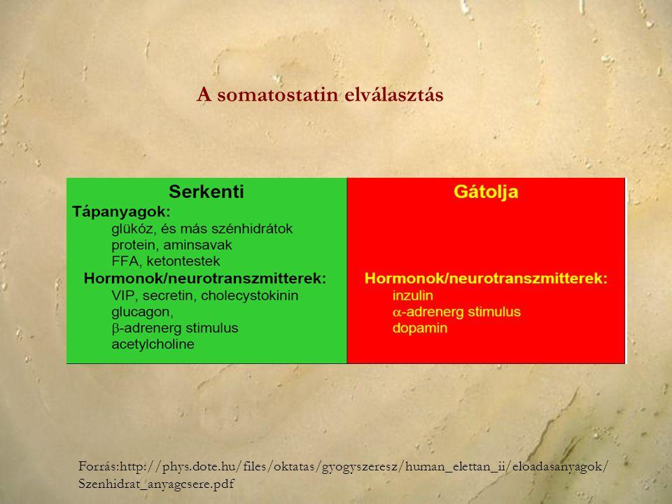 A somatostatin elválasztás