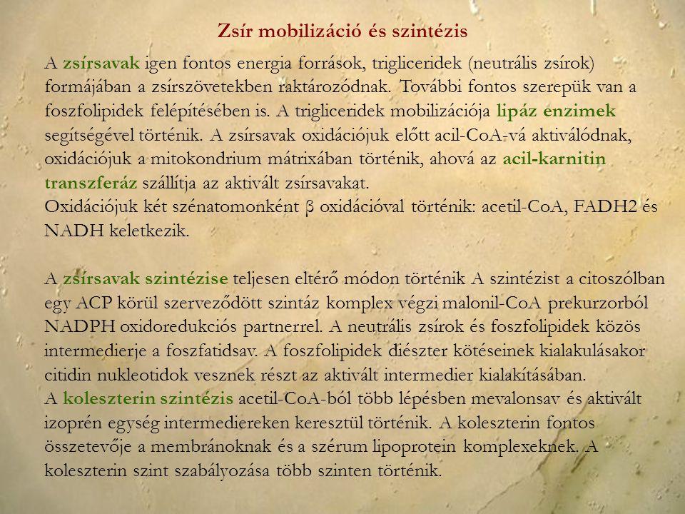 Zsír mobilizáció és szintézis