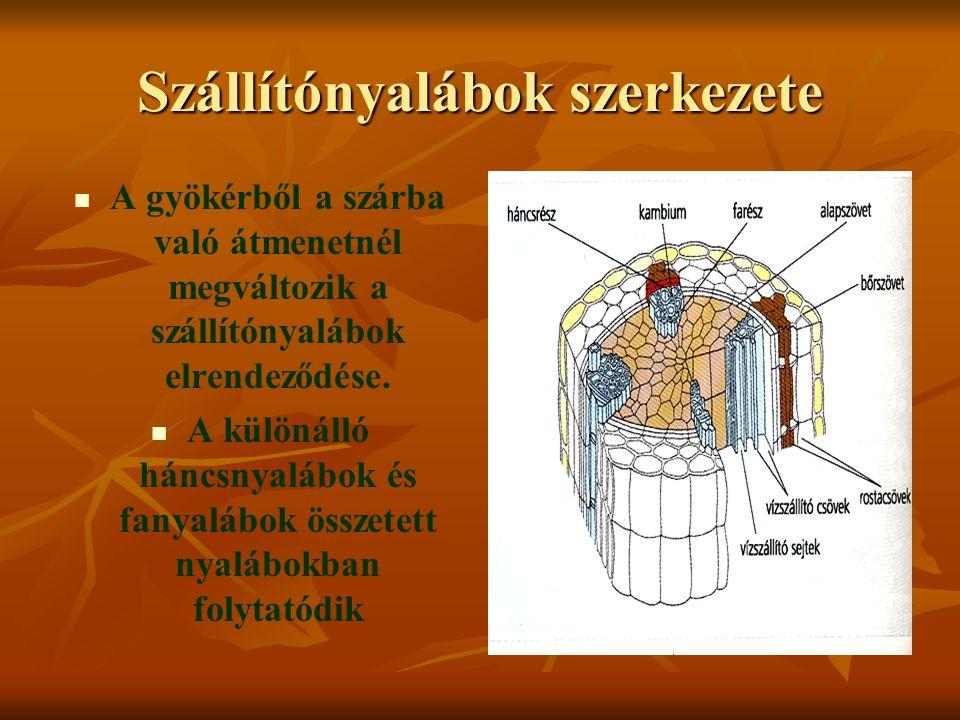 Szállítónyalábok szerkezete