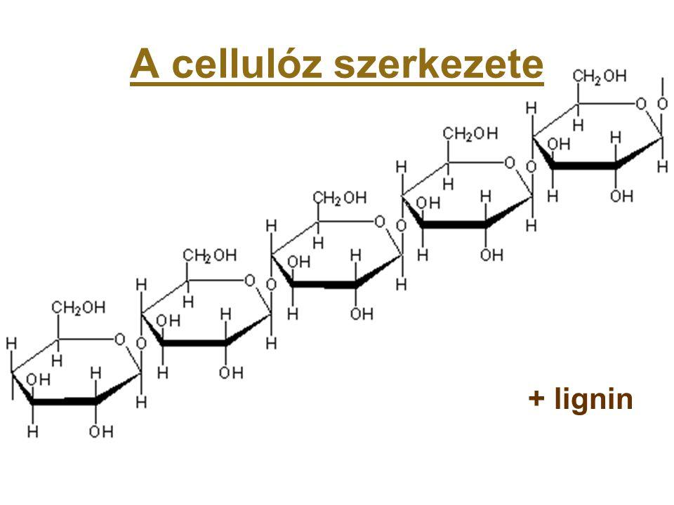 A cellulóz szerkezete + lignin