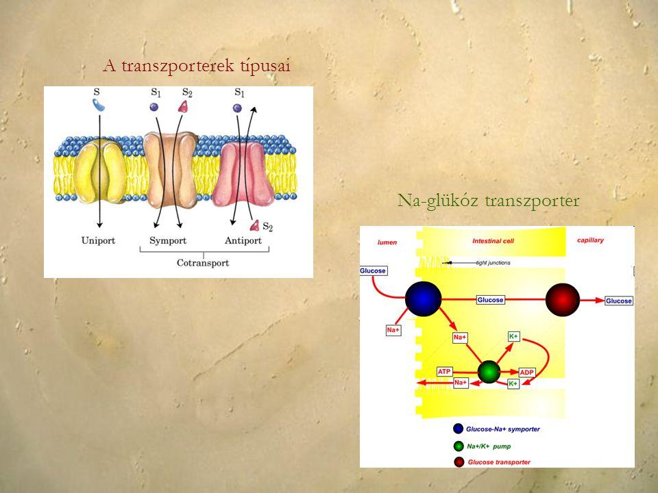 A transzporterek típusai
