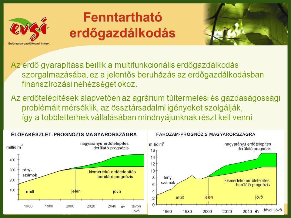 Fenntartható erdőgazdálkodás