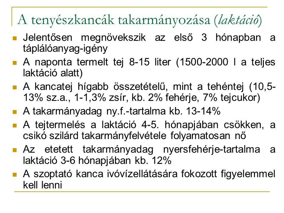 A tenyészkancák takarmányozása (laktáció)