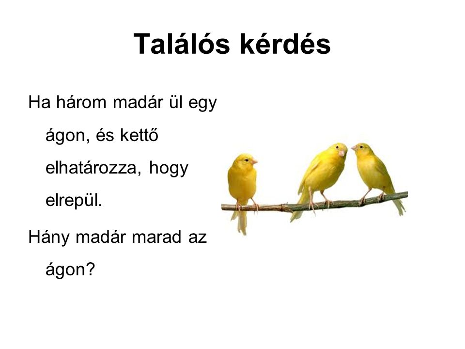 Találós kérdés Ha három madár ül egy ágon, és kettő elhatározza, hogy elrepül.