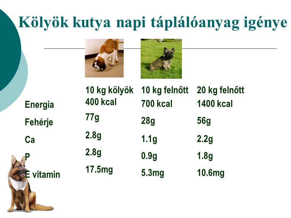 Kölyök kutya napi táplálóanyag igénye