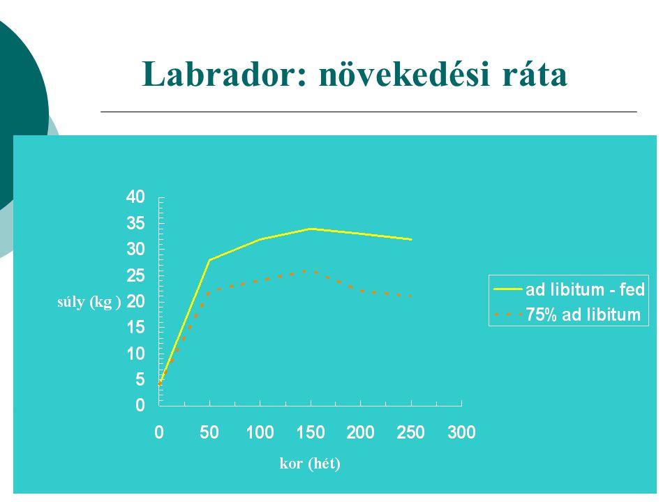 Labrador: növekedési ráta