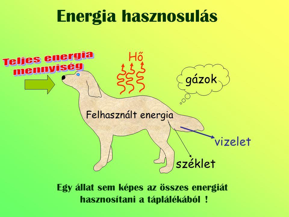 Energia hasznosulás Hő gázok vizelet széklet Teljes energia mennyiség