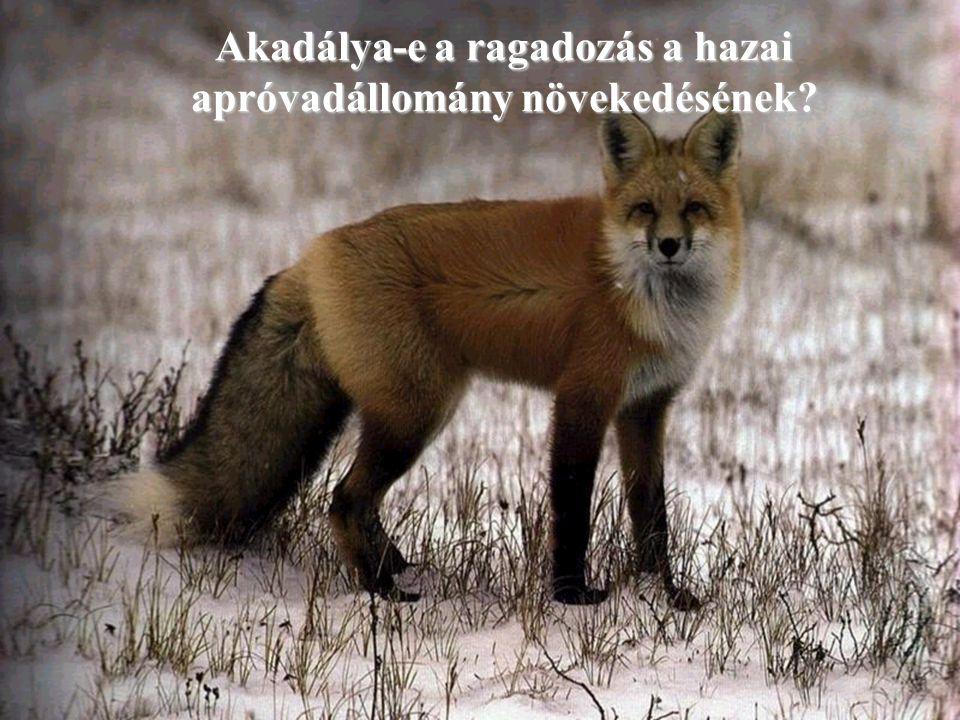 Akadálya-e a ragadozás a hazai apróvadállomány növekedésének