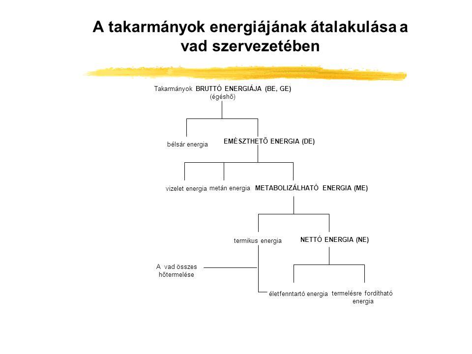 A takarmányok energiájának átalakulása a vad szervezetében