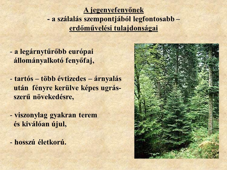 - a szálalás szempontjából legfontosabb – erdőművelési tulajdonságai