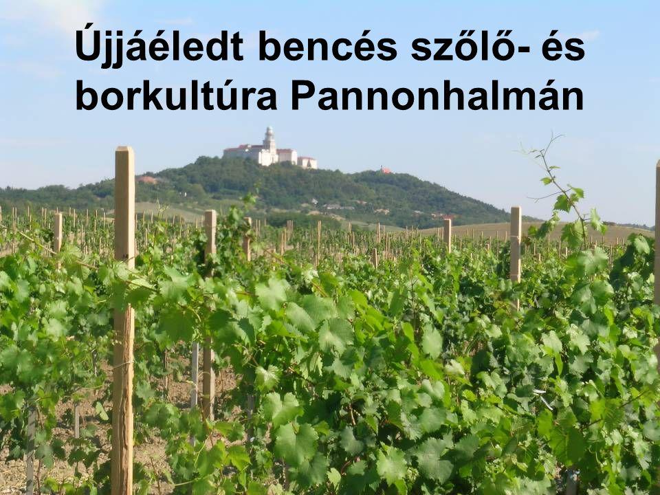 Újjáéledt bencés szőlő- és borkultúra Pannonhalmán
