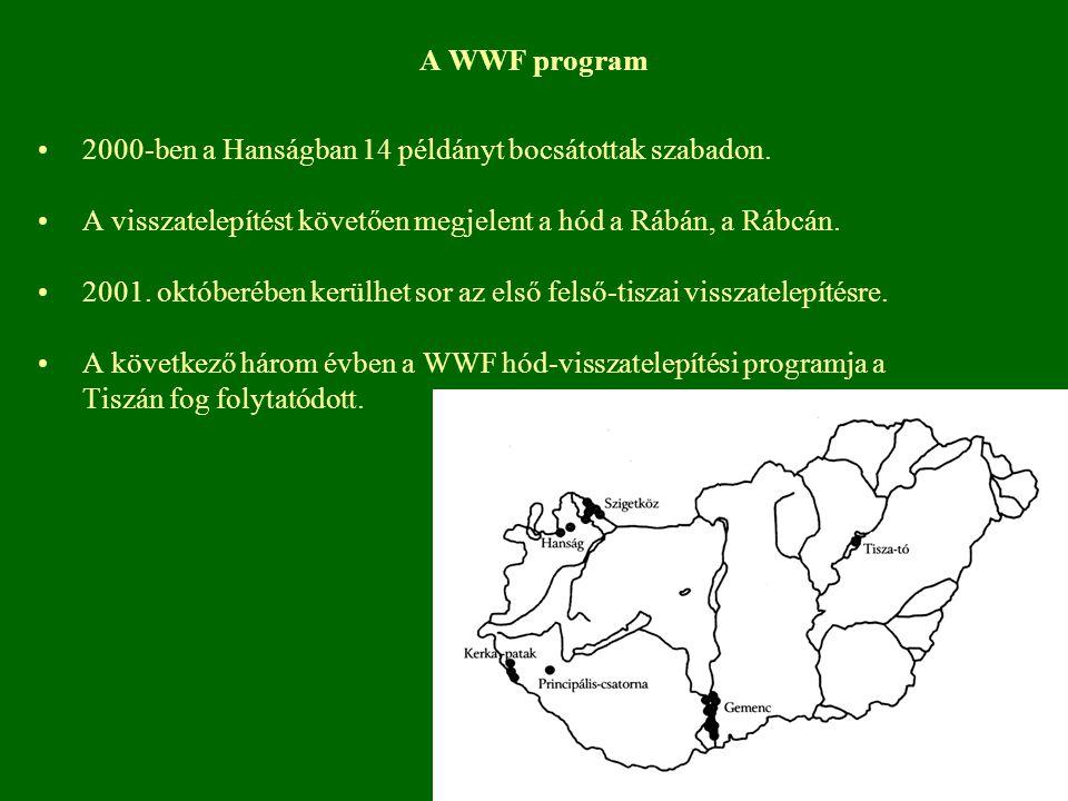 A WWF program 2000-ben a Hanságban 14 példányt bocsátottak szabadon. A visszatelepítést követően megjelent a hód a Rábán, a Rábcán.