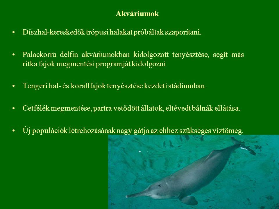 Akváriumok Díszhal-kereskedők trópusi halakat próbáltak szaporítani.