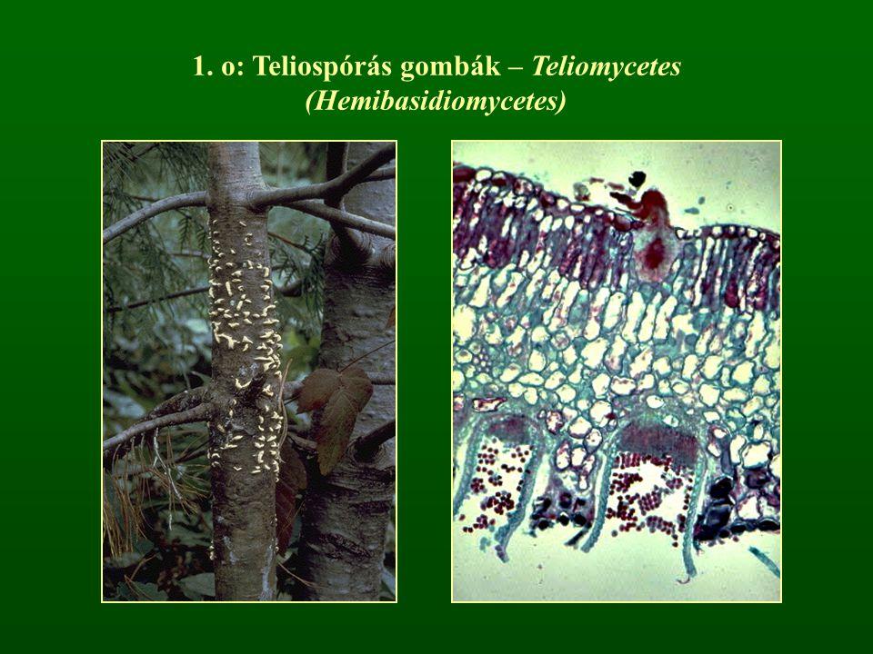o: Teliospórás gombák – Teliomycetes (Hemibasidiomycetes)
