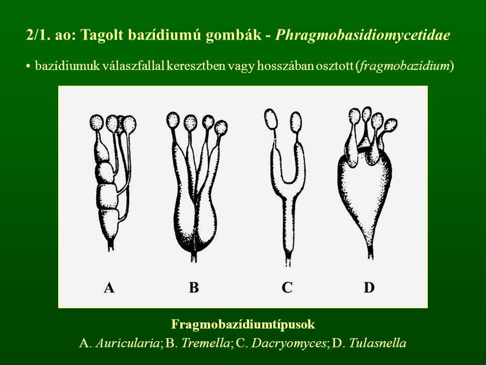 Fragmobazídiumtípusok