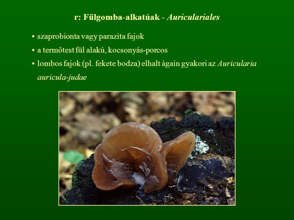 r: Fülgomba-alkatúak - Auriculariales